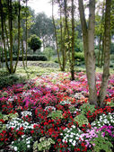 Colorful flowers under trees in a park — Stock Photo