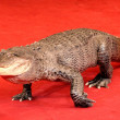 Stock Photo: Reptile crocodile