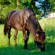 Horse on the pasture — Stock Photo #5938730