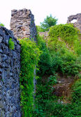 Old brick wall covered with vines — Stok fotoğraf