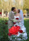 Kus van de bruidegom en de bruid — Stockfoto