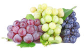 Collection of grape clusters — Stock Photo