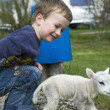 Little boy and little sheep - Stock Photo