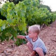 Young boy harvesting grape - Stock Photo
