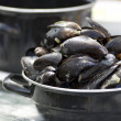 Dutch Mussels - Foto de Stock  