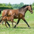 Mare and foal running — Stock Photo #5919961