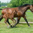 Mare and foal running — Stock Photo #5919963