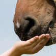 Horse Eating Grass — Stock Photo #5919980