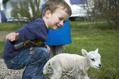 Little boy and little sheep — Стоковое фото