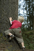 Little boy behind a tree — Stock Photo