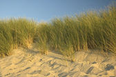 Dutch Dunes — Stock Photo