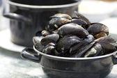 Nederländska musslor — Stockfoto