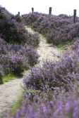 Heather Path — Stock Photo