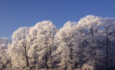 Hoarfrost Trees — Stock Photo
