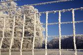 Frysta staket — Stockfoto