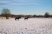 Vintern natursköna — Stockfoto