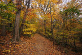 Fall in Washington DC — Stock Photo