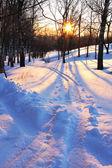 Zimní slunce — Stock fotografie