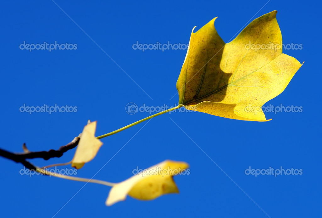 Yellow leaf on a blue background — Stock Photo #5937058