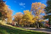 Fall in Washington DC — Stock Photo