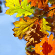 Autumn leaves — Stock Photo #5953170