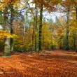 Autumn forest — Stock Photo #5955127