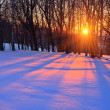 Sunset in a winter forest — Stock Photo #5956337