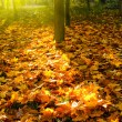 Autumn — Stock Photo #5956366