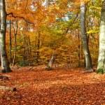 Autumn — Stock Photo #5956487