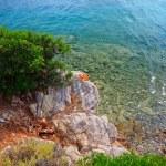 Green bush growing on the rock — Stock Photo #5956883