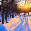 Sunset in a winter park — Foto Stock
