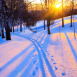 Stock Photo: Beautiful sunset in a winter park