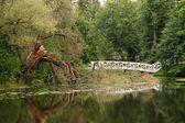 Estanque y árbol roto — Foto de Stock