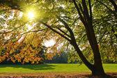 Albero autunno giallo — Foto Stock