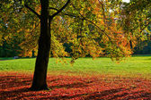 Höstens träd — Stockfoto
