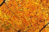 Fogliame di autunno — Foto Stock