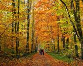Walking in autumn park — Stock Photo