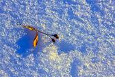 Teil tree leaf — Stock Photo