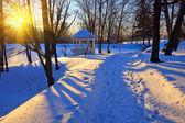 冬季公园 — 图库照片