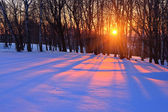 Sunset in a winter forest — Стоковое фото