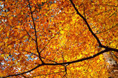 Gele herfstbladeren — Stockfoto