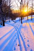Krásný západ slunce v zimě parku — Stock fotografie