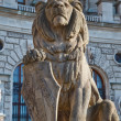 Lion statue in Vienna - Stock Photo