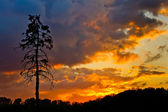 Pine tree and colorful sky — Stock Photo
