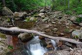 Wood river — Foto Stock