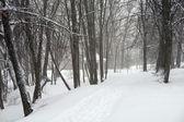 Tempestade de neve — Fotografia Stock