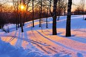 Winter park at sunset — Stock Photo