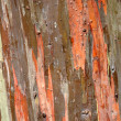 Stock Photo: Rainbow eucalyptus bark