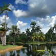 Tropical botanic garden — Stock Photo #6004592