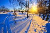 Sunset in winter park — Stock Photo